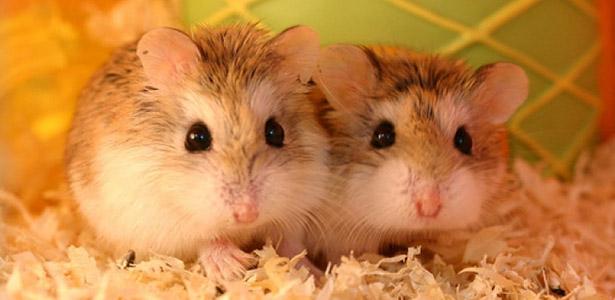 bingzon-20130528-120623pet-hamster-store