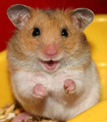 huong-dan-nuoi-hamster