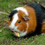 nhung-hinh-anh-chuot-hamster-de-thuong-9